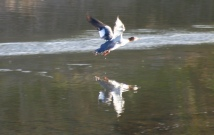 One of my best duck shots.